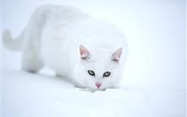 Белый кот, взгляд, лицо, глаза, снег