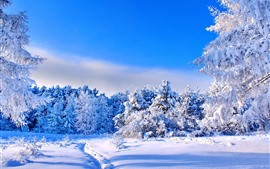 Preview wallpaper Winter, thick snow, trees, blue sky, shadow