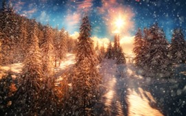 Preview wallpaper Winter, trees, snow, snowing, sunset
