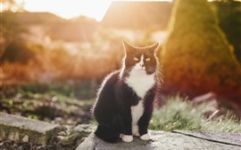 Black cat, sunshine, sit, backlight