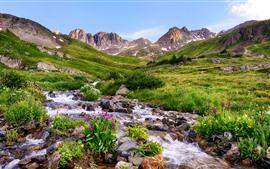 Preview wallpaper Colorado, flowers, mountains, stones, stream, USA