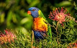 Papagaio colorido penas, flor vermelha
