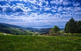Campo, montañas, árboles, flores, cielo azul, nubes