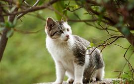 壁紙のプレビュー かわいい猫は側面、木、小枝を見て見てください