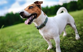 Dog front view, head, legs, grass