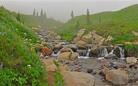 Preview wallpaper Flowers, slope, stream, stones, fog