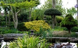 Сад, Ридс, Деревья, пруд