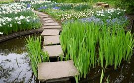 Vorschau des Hintergrundbilder Gras, Blumen, Wasser, Steine, Park