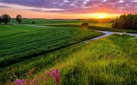 Campos verdes, raios de sol, árvores, grama, nuvens, pôr do sol