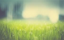 Aperçu fond d'écran Herbe verte, cercles de lumière, brumeux, été