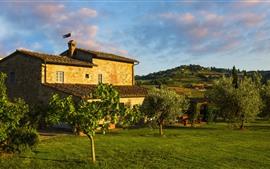 Itália, Toscana, Casa, Jardim, Árvores, Prado Verde
