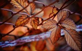 Aperçu fond d'écran Feuilles, clôture de fil, automne, brumeux