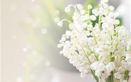 Lirios del valle, flores blancas, nebulosos.