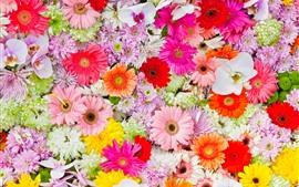 Vorschau des Hintergrundbilder Viele Blumen, Chrysantheme, Gänseblümchen, Orchideen, bunt