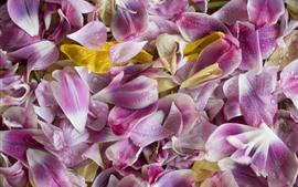 Muchos pétalos de flores rosados, gotitas de agua.