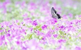 Muitas flores cor-de-rosa, borboleta, inseto
