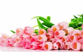 Muchas flores de tulipán rosa, fondo blanco