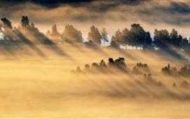Manhã, campo, raios de sol, nevoeiro, casa, campos