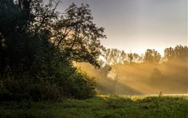 Vorschau des Hintergrundbilder Morgen, Bäume, Sonnenstrahlen, Gras, Grün, Natur