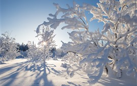 Preview wallpaper Northwest Territories, Canada, thick snow, trees, sun rays, winter