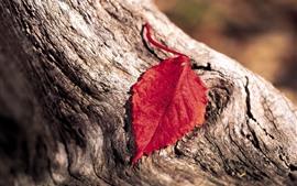 壁紙のプレビュー 1つの赤い葉、木材