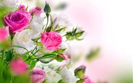 预览壁纸 粉红和白玫瑰,花束,眩光
