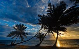 Meer, Palmen, Silhouette, Sonnenuntergang, Himmel, Wolken