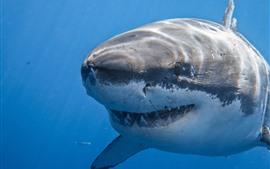 壁紙のプレビュー サメ、海、歯、口