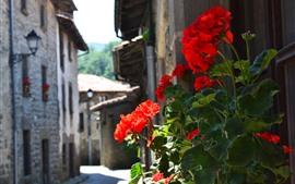 Espanha, gerânio, flores vermelhas, rua, casas