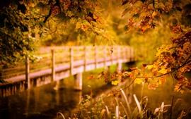 Осень, кленовые листья, мост, река, туманные
