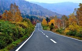 Outono, árvores, montanha, estrada