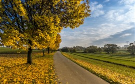 Preview wallpaper Autumn, trees, yellow maple leaves, road, fields