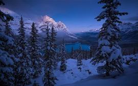 Национальный парк Банф, Альберта, Канада, озеро, снег, деревья, горы, зима