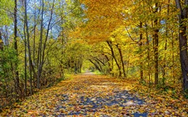 Preview wallpaper Beautiful autumn, road, trees, yellow leaves