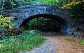Puente, árboles, camino, otoño