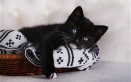預覽桌布 可愛的黑貓,藍眼睛,看,休息