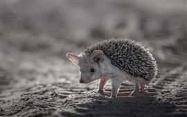 Preview wallpaper Cute hedgehog, sand