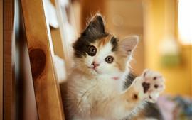 Lindo gatito, mirada, ojos, pata, escaleras