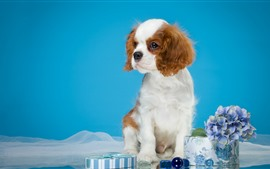 Preview wallpaper Cute puppy, flowers, blue background