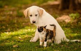 預覽桌布 狗和小貓,朋友,草