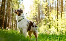 Perro, árboles, hierba, nebuloso, verano.