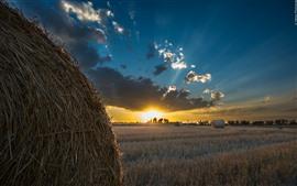 Campo, feno, pôr do sol