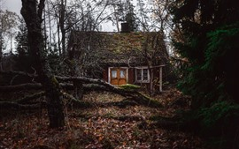 Forest, house, bushes