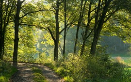 Preview wallpaper Germany, Bayern, trees, sunshine, nature scenery