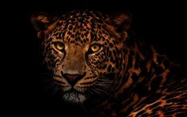Леопард, лицо, глаза, взгляд, черный фон