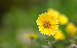 Uma flor amarela, pétalas, fundo verde