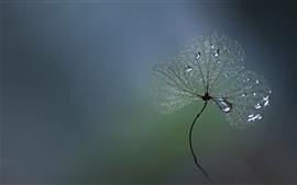 Растения, капельки воды, серый фон