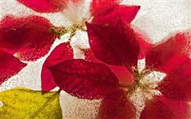 Красные листья, лед, замороженные