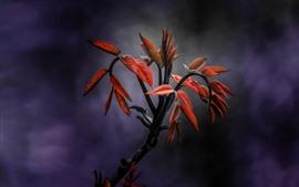 Красные листья, веточки, облака