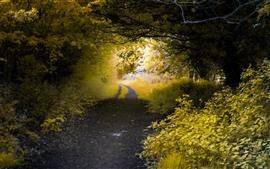 Дорога, деревья, листья, путь, природа